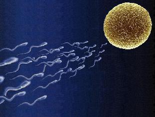bolshaya-vyazkost-spermi